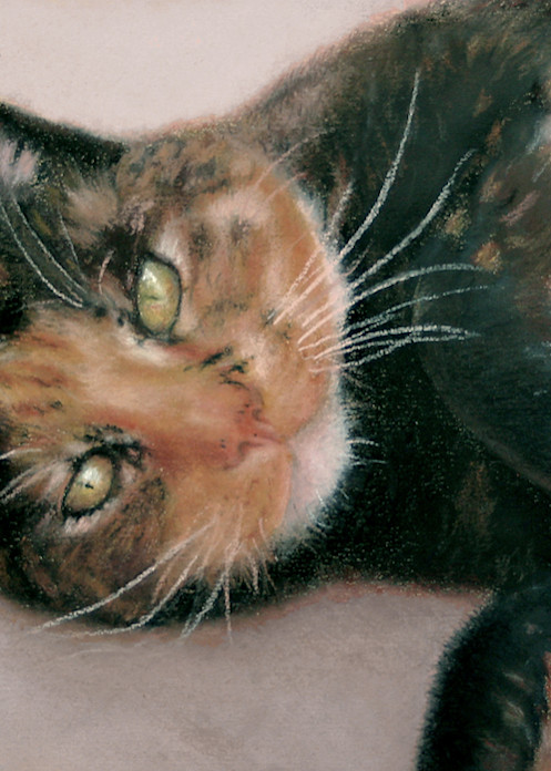 Calico cat, Snickers by Nancy Conant