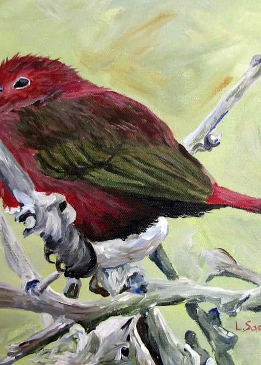 Bluebilled Firefinch Art | Linda Sacketti