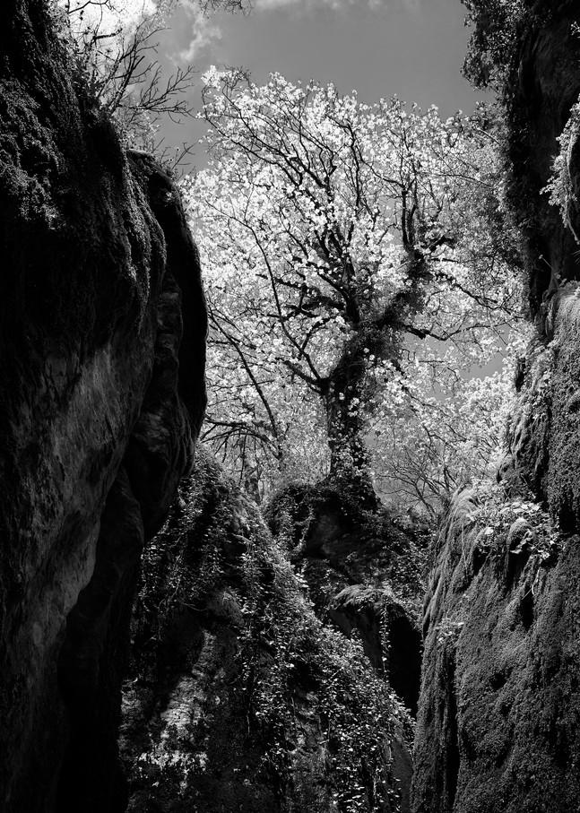 John E. Kelly Fine Art Photography – Sacred Tree - Land and Sky