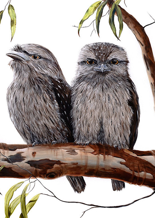 Tawny Frogmouths 2