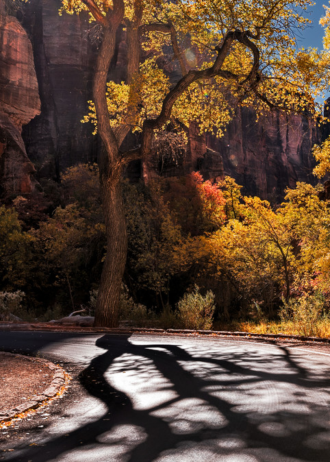 Fall Road In Zion Photography Art   Kendall Photography & Fine Art