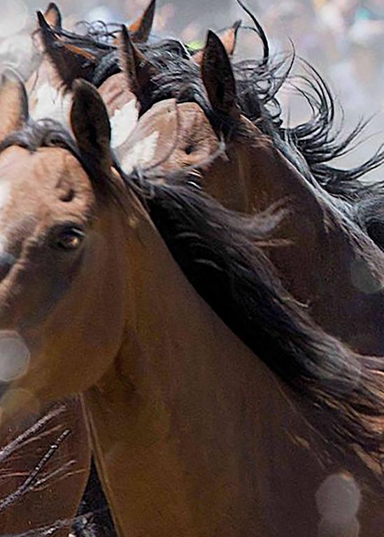 Pure Bread Mustangs Art | Cutlass Bay Productions, LLC