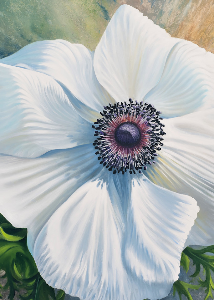 White Poppy Anemone  Art | Leanne Hanson Art