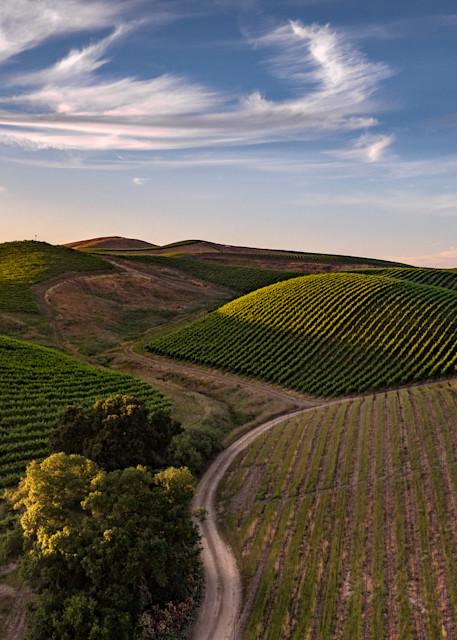 Rolling Carneros vineyard hills