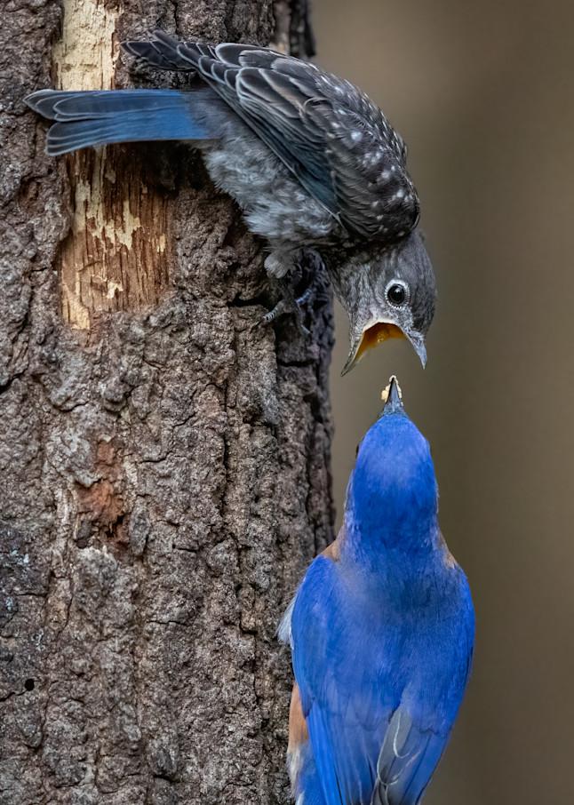 Nature's Miracles Photography Art | danieldauria
