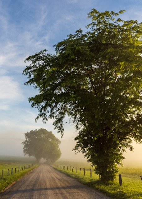 Hyatt Lane Trees Photography Art | Thomas Yackley Fine Art Photography