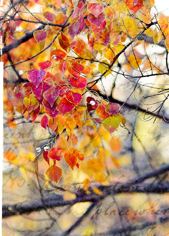 Cascade Of Leaves With Text Photography Art   TERESA BERG PHOTOGRAPHY