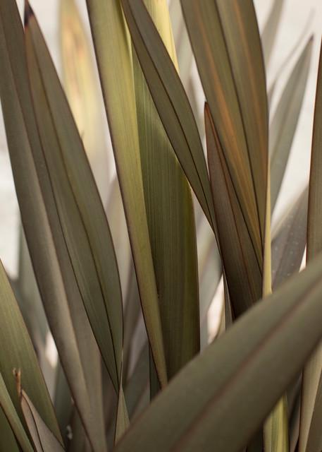 California Grass 2 Photography Art | TERESA BERG PHOTOGRAPHY