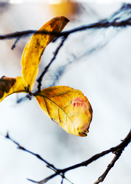 Cloudy Day Leaves 2 Photography Art   TERESA BERG PHOTOGRAPHY