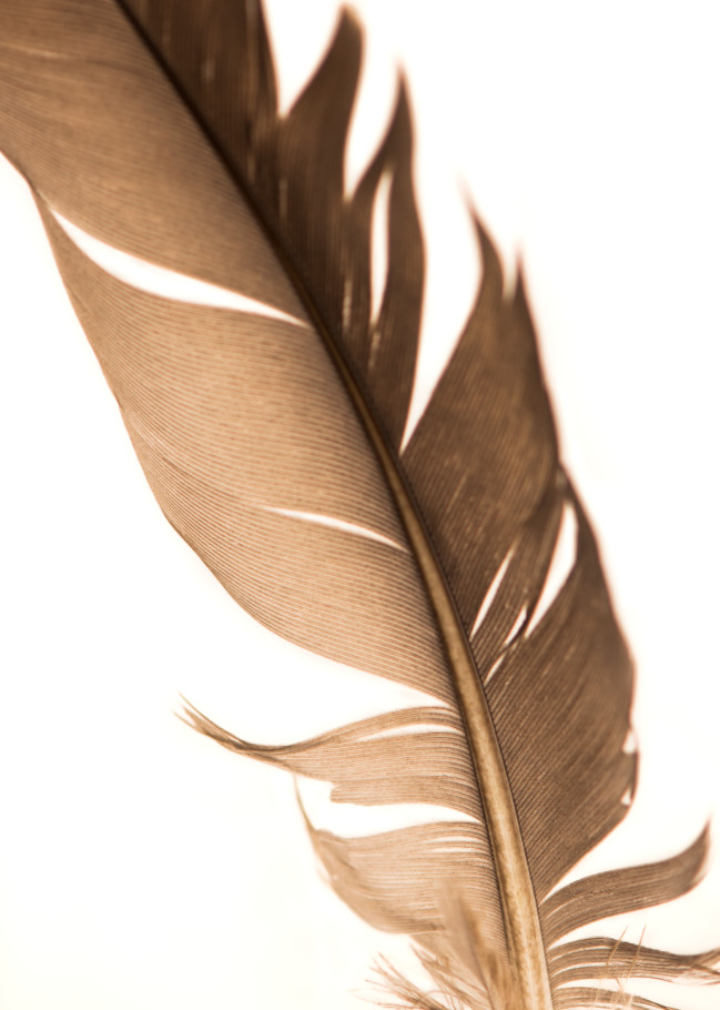 Feathers 3