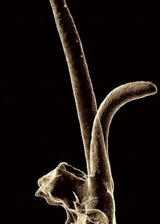 Oryx Art   Night Sculpture