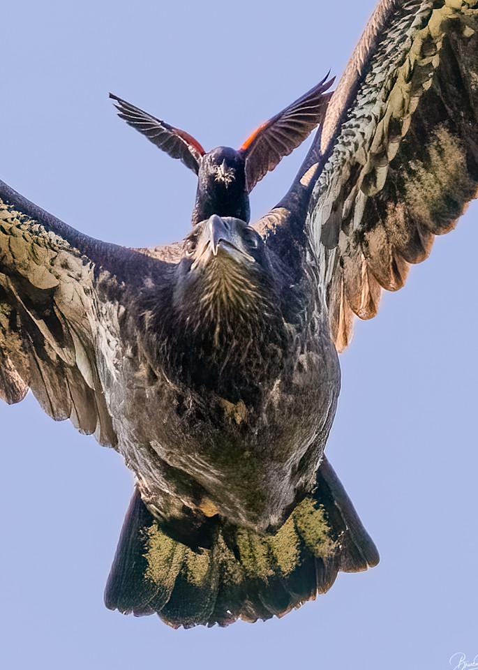 On Wings of Eagles II