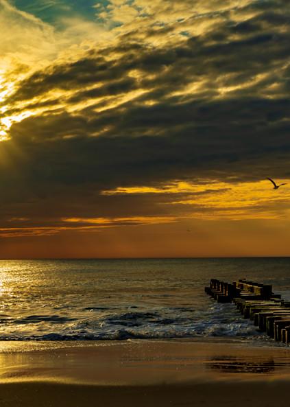 Sunrays and Seagulls