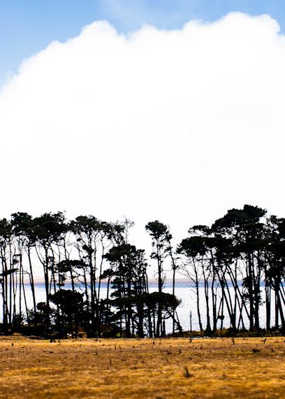 Big Sur coast, trees and fog