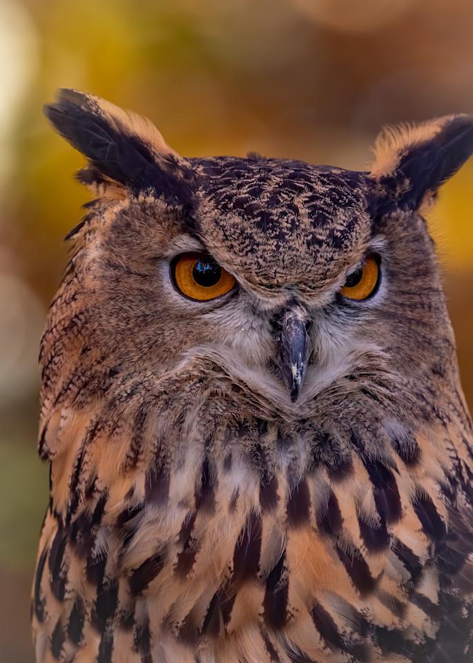 Great Horned Owl Portrait