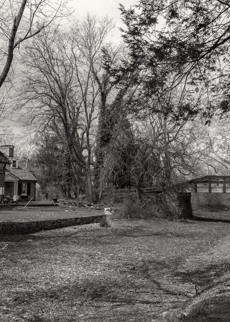 Tree House Photography Art | Alina Marin-Bliach Photography/alinabstudios LLC
