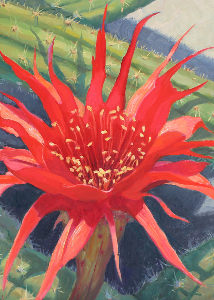 Cactus Flower 6 Art   Diehl Fine Art