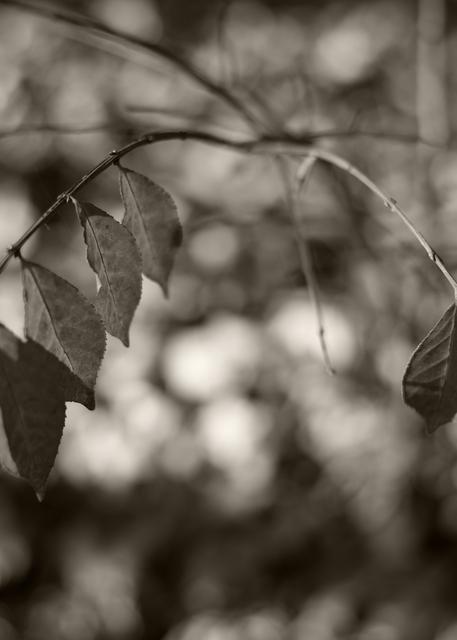 Hanging On Photography Art   Alina Marin-Bliach Photography/alinabstudios LLC