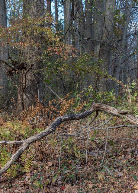 Branches And Ferns Photography Art   Alina Marin-Bliach Photography/alinabstudios LLC