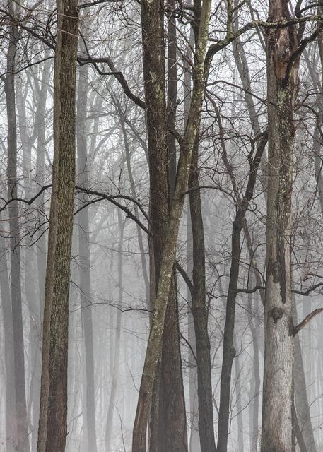 A Foggy Parting Photography Art | Alina Marin-Bliach Photography/alinabstudios LLC