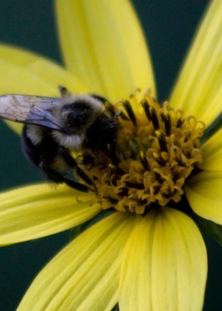 Busy Bee Photography Art | E. Morton Studios