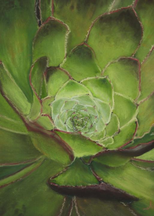 Succulent paintings, Aeonium Arboreum, by Nancy Conant