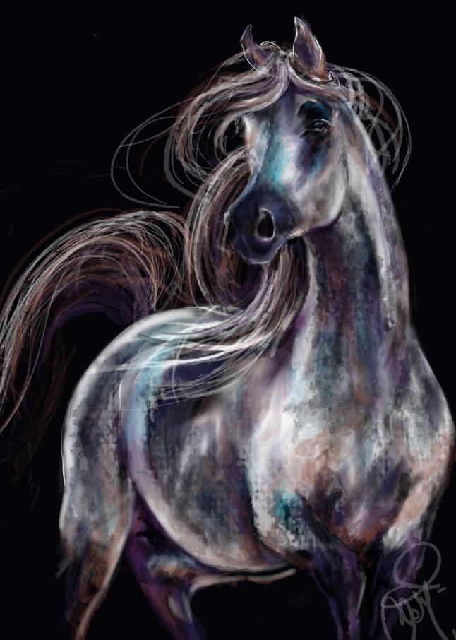 Gray Dapple Stallion over Black Background