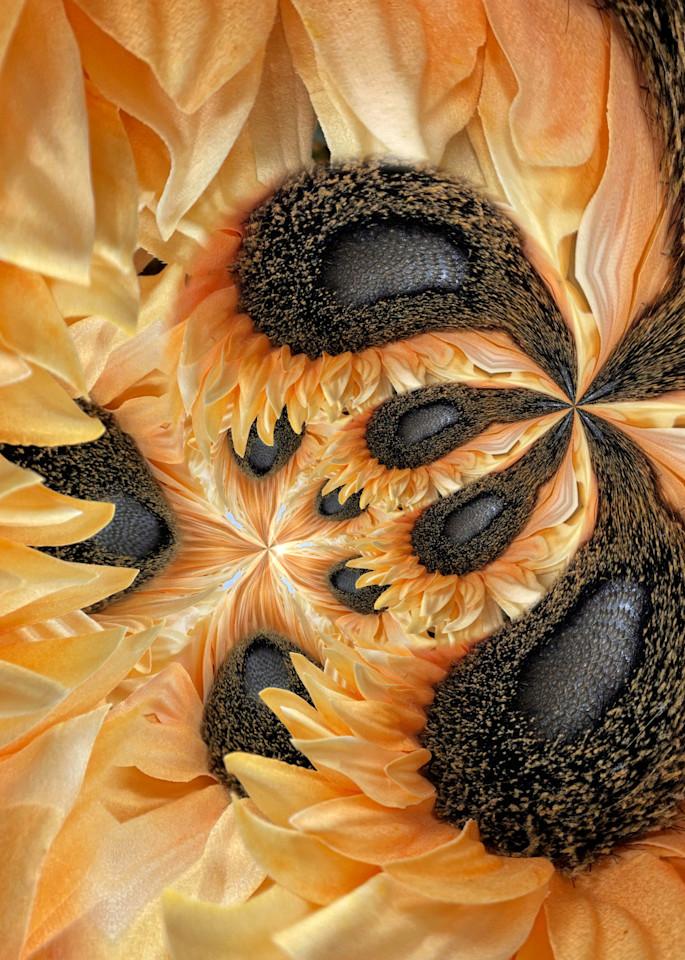 Circular Orange Photography Art | Kathleen Messmer Photography