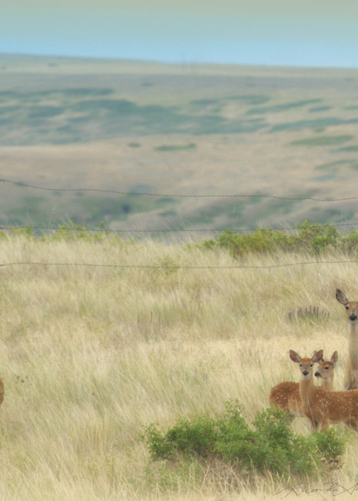 Deer and three fawns art