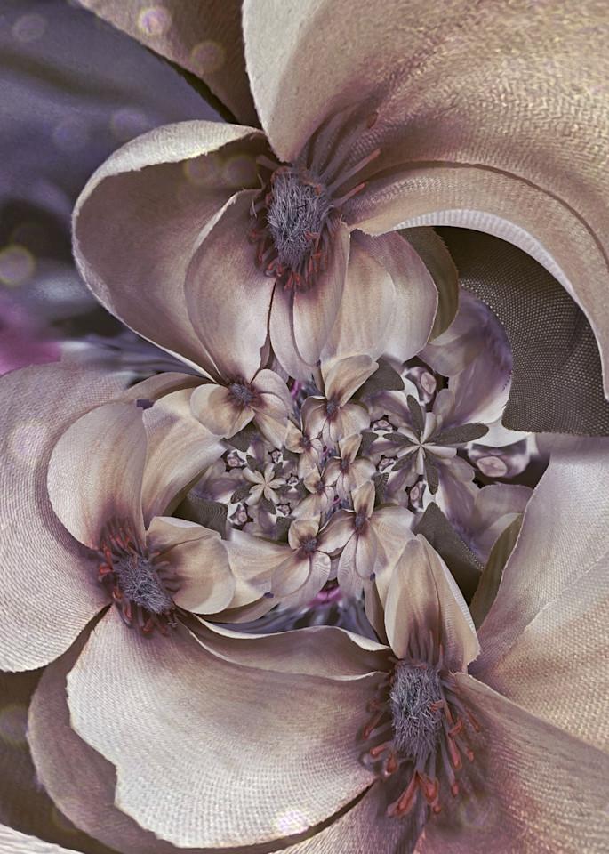 Circular Magnolia Photography Art   Kathleen Messmer Photography