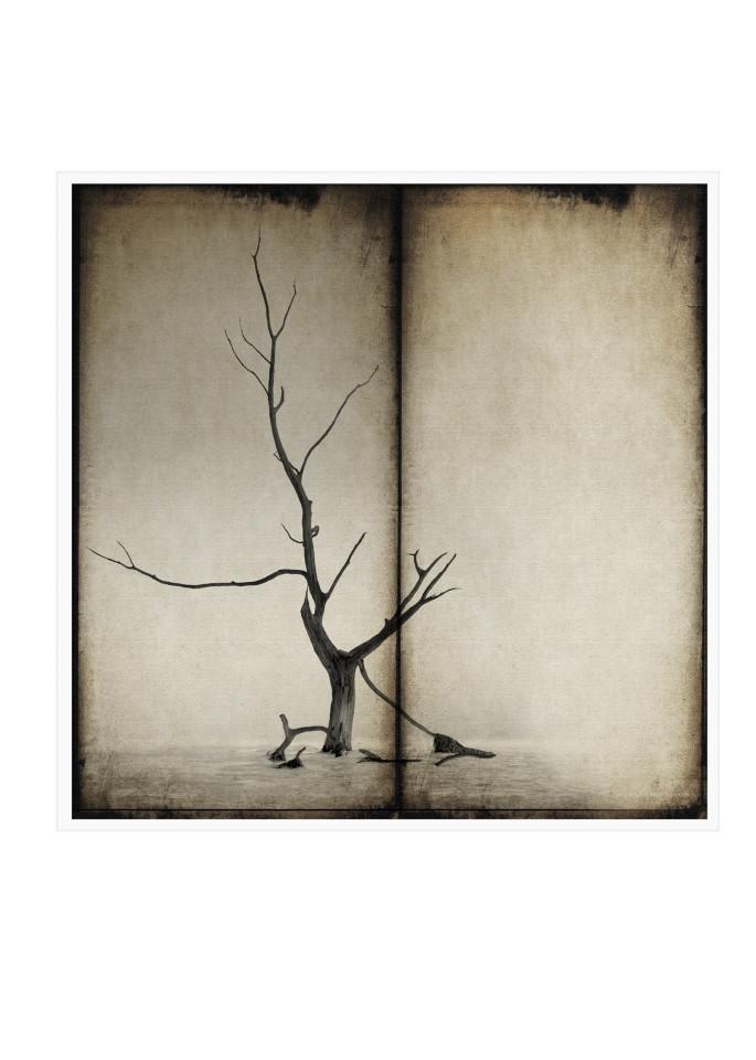 4 Art | Roy Fraser Photographer