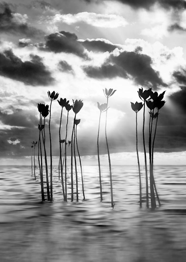 Harv Greenberg Photography - Silent Dream
