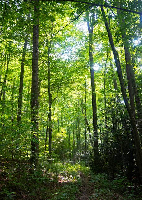 Shope Forest Sunlit Morning