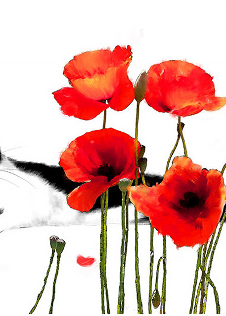 Cat And Poppy Photography Art | Cheng Yan Studio