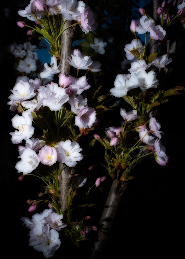 The Lights Of Spring Art | Martin Geddes Photography