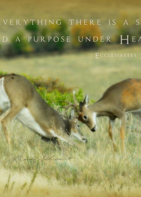 Deer Rutting Art