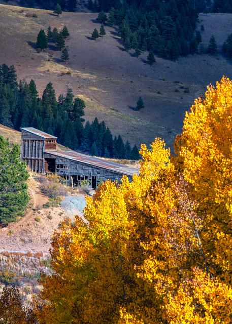Silver and Gold - Colorado fall colors fine-art photography prints