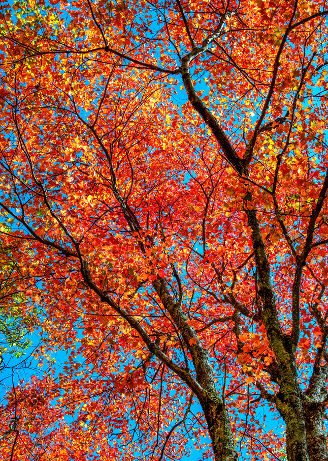 Autumnal abstract - Smoky Mountains fall colors fine-art photography prints