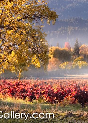 Morning Mist Napa