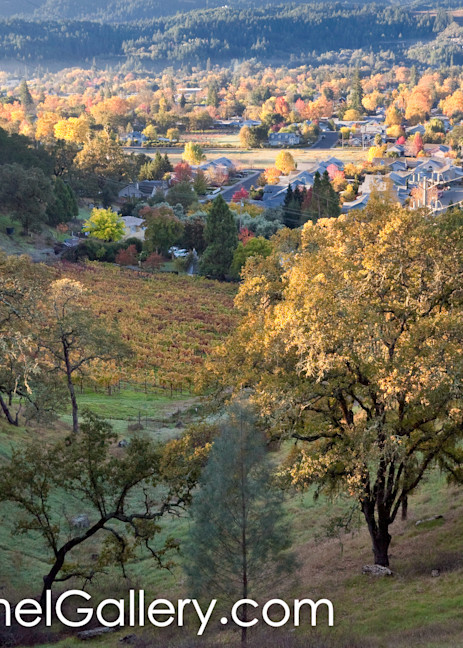 Autumn View Calistoga