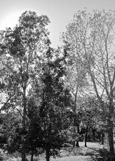 Farmland 28 Photography Art   Drone Video TX