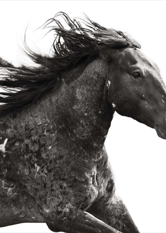 Freedom Photography Art | Sierra Luna Photography