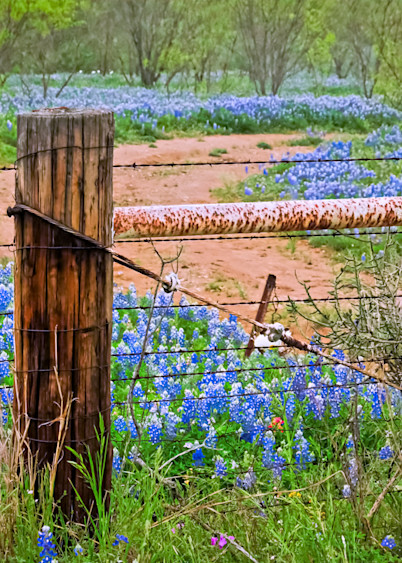 Bluebonnets And Fence 5 Colorful Photography Art | Drone Video TX
