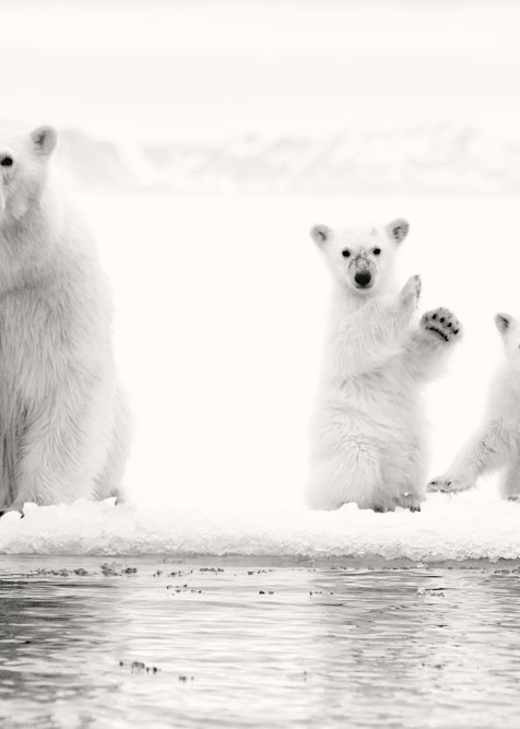 Ice Bears, Grayscale Photography Art | templeimagery