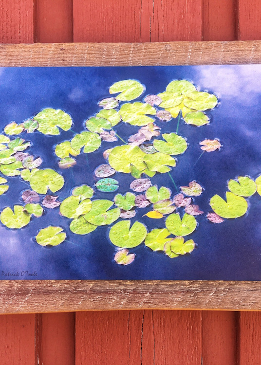 Patrick O'Toole Photography hand crafted barn wood mount with Water Lillies gilée.