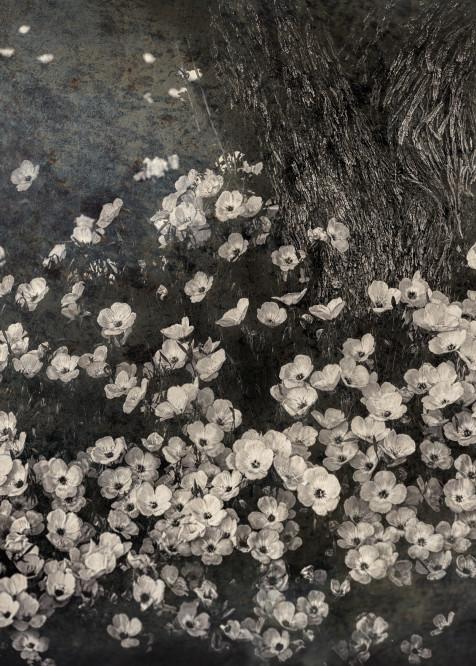 Flowers In A Fairy Tale, B&W Photography Art | Carol Brooks Parker Fine Art Photography