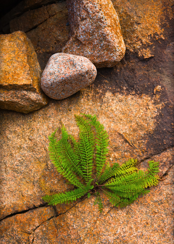 fern in rock, green and gold