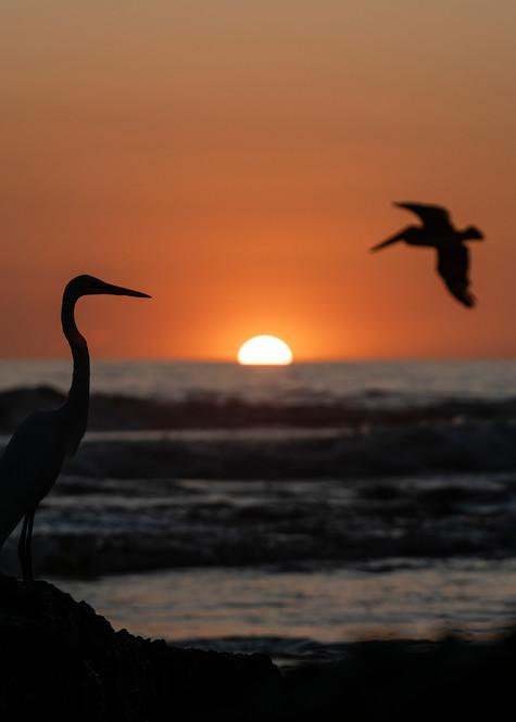 Seafaring Birds Photography Art | Kit Noble Photography