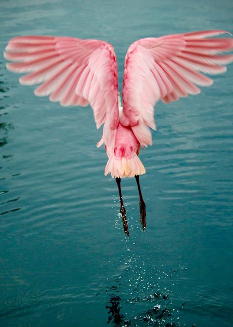 Angel Wings Photography Art | CJ Harding