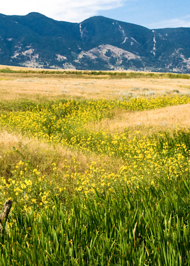 Wyoming Wildflowers Photography Art | Eric Hatch